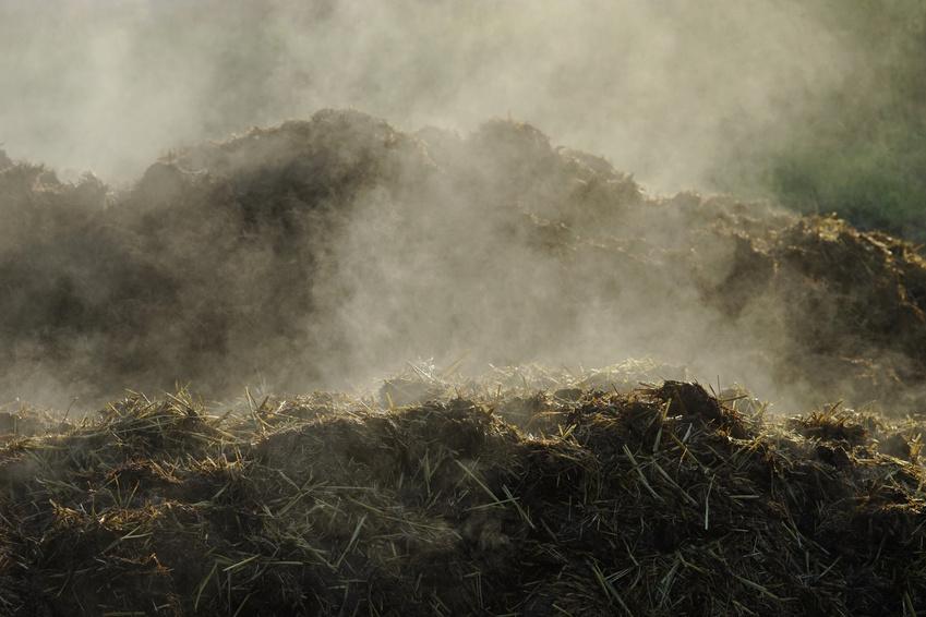 Dampfender Misthaufen im Gegenlicht